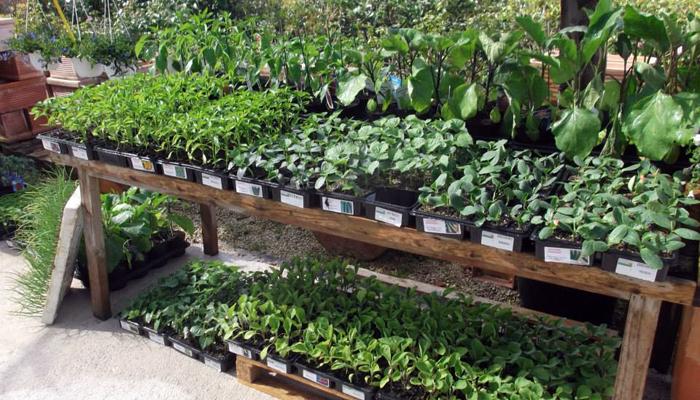 piante da orto idee per il design della casa