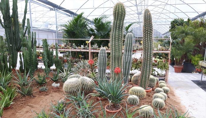 Composizione di piante grasse in grande vaso rg21 for Foto angoli giardino